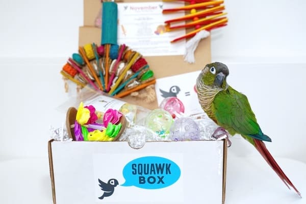 squawk box bird subscription